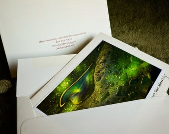 eco friendly greeting card, Green Heart, Rain, Waterlily photo, suitable for framing