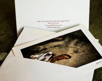 Beach scene, 5x7 greeting cards, handmade photo card - Ready to Ship, eco friendly - Shell and Beach Rock - StrongylosPhoto