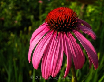 flower photography 5x7 photo purple cone flower sparkling morning dew Echinacea photograph kitchen art