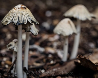 soft earthy macro mushrooms photo, 8x12, macro photography, fungi, fine art, kitchen decor, earthy, browns, mushrooms, woodland