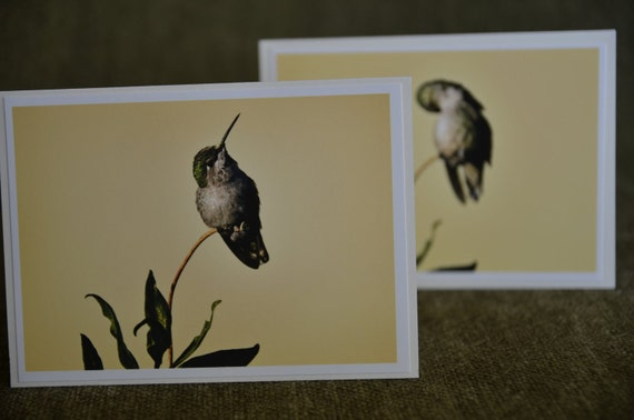 ready to ship 6 pack notecards, hummingbird, yellow background StrongylosPhoto affordable paper goods