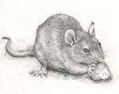 The Nibbler - Print of charcoal drawing - Rat, Mouse, Gerbil