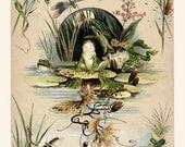 Victorian Reprint Nature Studies w/ frogs