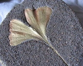 Ginkgo Cement Leaf Casting