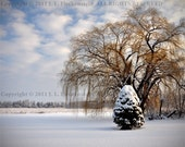 Willow Tree Snow Photo Fine Art Photograph 8 x 10 inch by J. L. Fleckenstein on Kodak Endura Metallic Paper