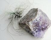 cubed amethyst crystal on matrix from thunder bay, canada