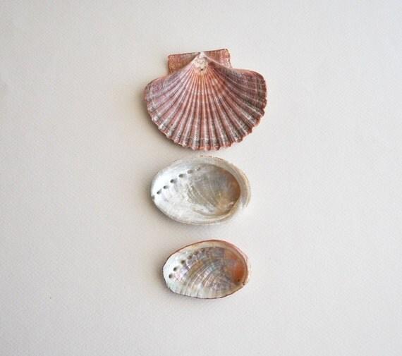 3 shells, 1 pectin and 2 abalone