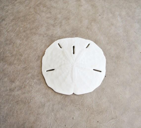 1 large sand dollar shell