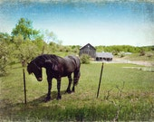 Big Black Horse Farm archival photograph
