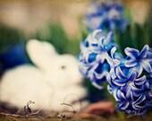 Hyacinth bloom, photograph, rabbit, botanical print, 5x7 photograph