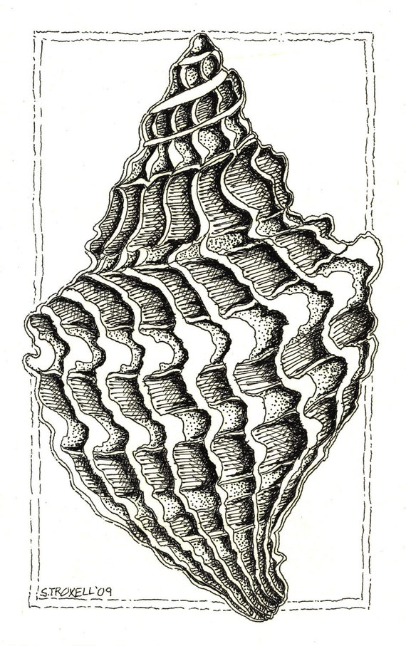 Print of black and white Conch Shell pen and ink drawing