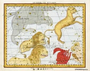 LEO constellation map zodiac print lynx and lion