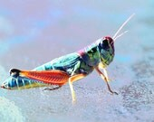 Lucky neon grasshopper 4 x 6 print