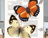 Butterflies Orange White on the Old Hebrew Dictionary page