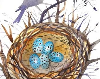 Three bird nest coupon