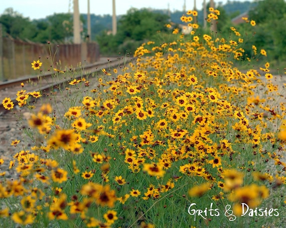 By the Tracks in Color - Nature Photography - Southern Living Photography