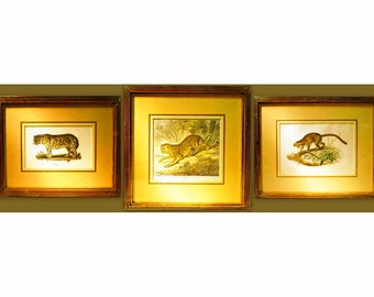 3 c1870s ANTIQUE ANIMAL Litho Prints - Important Hand Colored Natural History Prints with APF Gilt Frames // Free Shipping