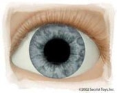"""Doll Eyes - """"Real Eyes"""" Brand - Made in the USA - Clear Glass-like Finish - Choice of 5 Colors"""