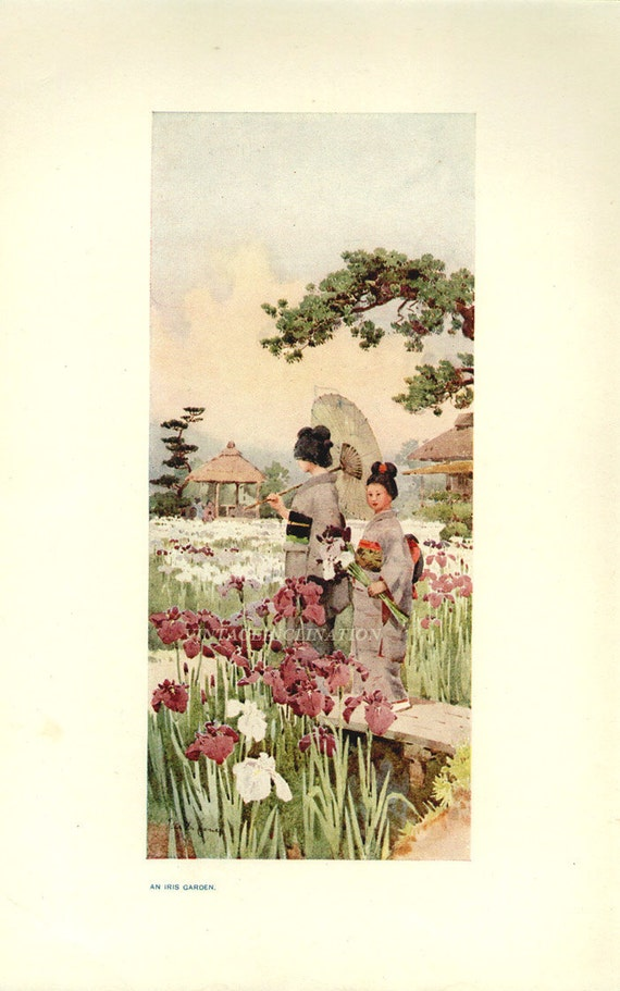 1911, Japanese Girls In An Iris Garden, 100 years old Japan, Asian