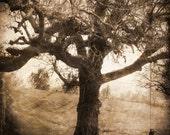 The Forgotten Tree, 5x5 photograph