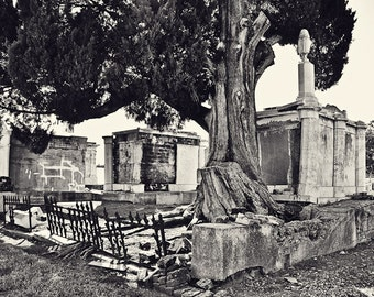 At Rest- New Orleans Cemetery Photography- 8x10 Matted Photo- Black and White Art- Rugged Tree