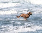Dog Running on the Beach Photo 5x7 Photograph Ocean Wave Photography