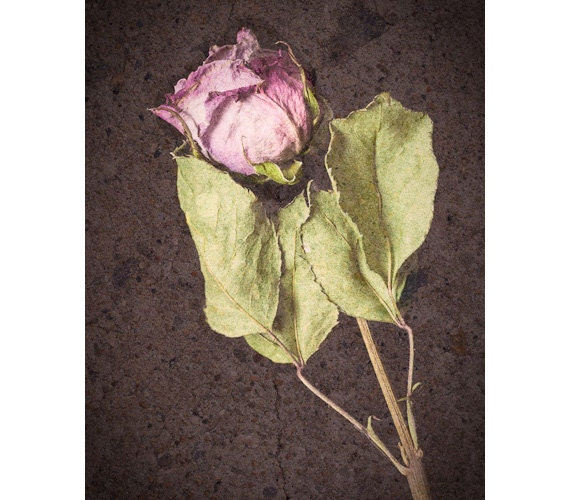 The Flower and the Stone - photograph 8x10