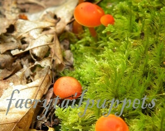 "Photo Print on a blank card of ""Orange Mushrooms on Moss"""