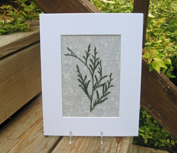Modern Cottage Art, Real Pressed Woodland Botanical Series,  Matted 8 x 10,  Pressed Green Woodland Leaves