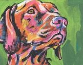"Hungarian Vizsla art print pop dog art bright colors 8.5x11"" LEA"