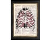 The Sternum and Lungs Anatomy - Print on Vintage Dictionary Paper - 8x10.5