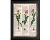 3 Molto Bella Italian Tulips - Botanical Art Printed on Lovely Vintage Dictionary Paper - 8x10.5
