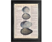 The Ocean's Lovely Shells - Print on Vintage Dictionary Paper - 8x10.5