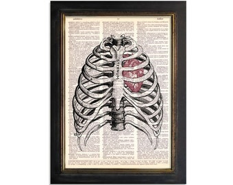 The Sternum and Heart - Anatomy Diagram Art Print on Beautifully Upcycled Vintage Dictionary Paper - 8x10.5