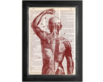 Superficial Back Muscles Close Up in Red Ink - Anatomy Diagram Printed on Beautifully Upcycled Vintage Dictionary Paper - 8x10.5