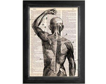 Close up of The Superficial Muscles - Printed on Upcycled Vintage Dictionary Paper - 8x10.5 Anatomy Art