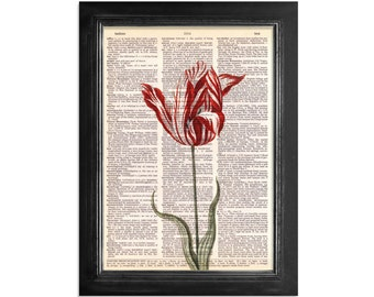 Red and White Tulip - Printed on Vintage Dictionary Paper - 8x10.5
