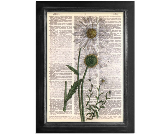 White Daisy Flowers - Botanical Art Print on Recycled Vintage Dictionary Paper - 8x10.5