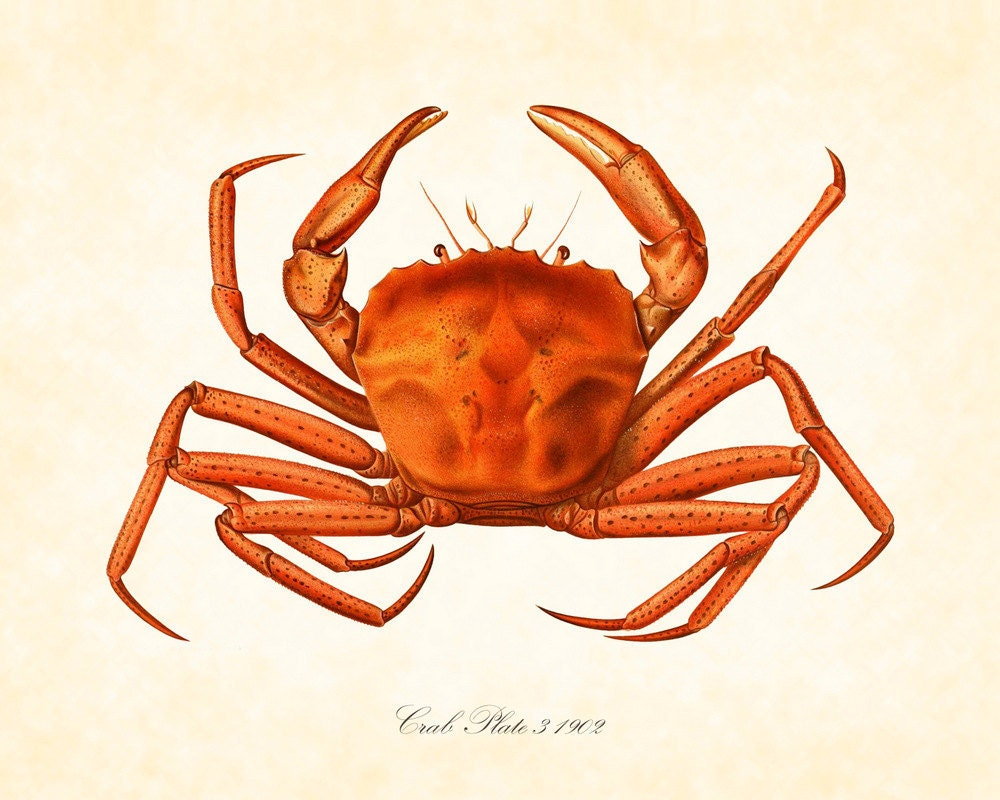 crab illustration images reverse search