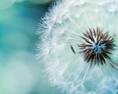 Fine art photography - dandelion nature photography 5x5 - blue green teal spring macro print - still life - mylittlepixels