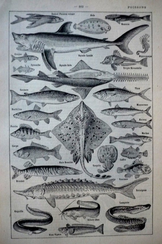 vintage illustration fish old french dictionary