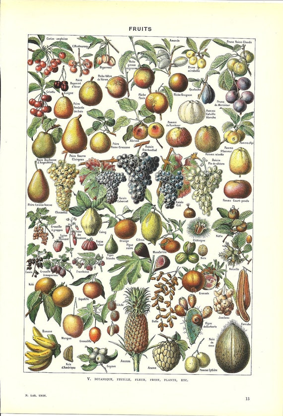 French Dictionary Page - FRUITS Color Illustration - 1948