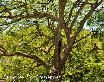 Vibrant Tree 8x10 photograph