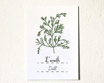 Food Artwork 'Dill' vegetable kitchen art print 5 x 7 Green