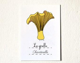 French vegetable art print Chanterelle (Fruits and Vegetables Food series) 5 x 7 print art office desk man