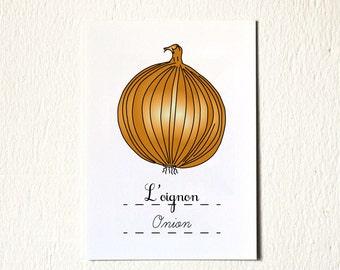 Kitchen Illustration print 'onion' - Kitchen Decor - 5x7 Orange brown