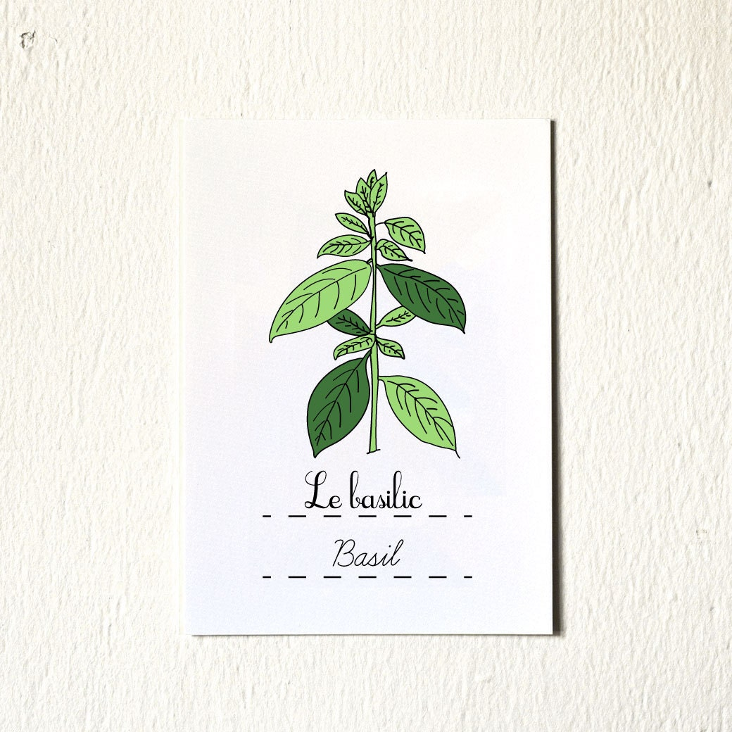 Kitchen Art Vegetables Print Botanicals Kitchen Art: Eco Kitchen Art Print 'Basil' 5x7 Herbs French Green