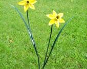 Small double daffodil garden spike