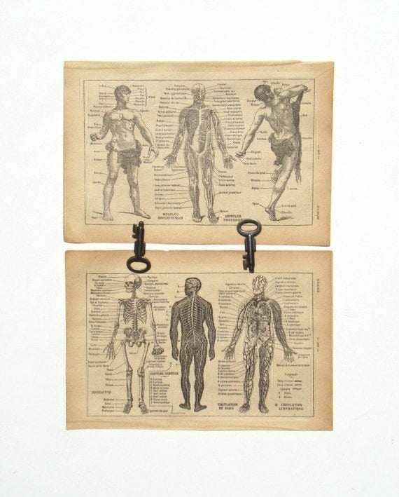 Anatomy - 1929 French Dictionary Page - Body Systems - Medical Home or Office Decor