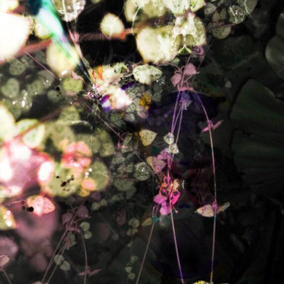 50x50cm Labella Black Digital Canvas Art Print - Modern Abstract Organic Botanical Artwork